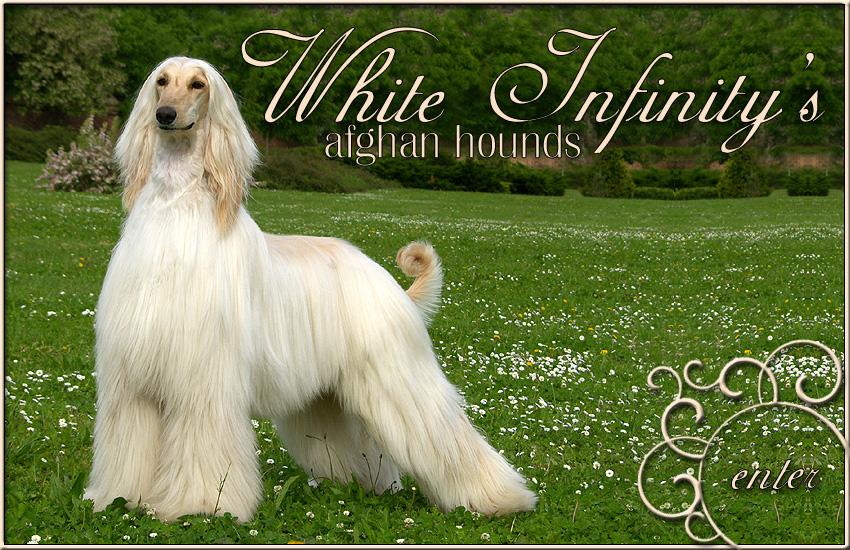 White Infinity s Afgha...